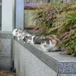 猫の集会はなぜ開かれるのか?その目的は?